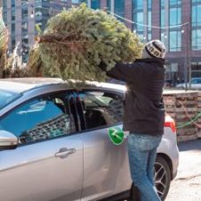 zipcar-tree-haulin